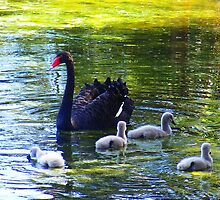 Another Pen & Her Cygnets by Raven Fielding