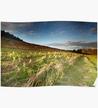 Long Shadows on Dale Spinney Poster