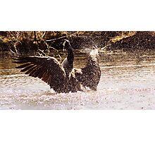Canada Goose Splashing in a Lake Photographic Print