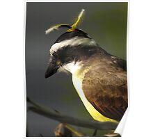 feathered headdress II - adorno de la cabeza Poster