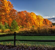 Autumn Gold by Kathy Weaver