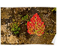 Red Leaf with Clover Poster