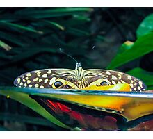 Blue eyes butterfly Photographic Print
