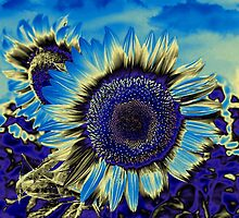 Blue Sunflower by Nhan Ngo