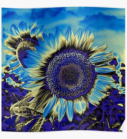 Blue Sunflower Poster