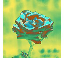 Mint and Green Rose Photographic Print