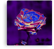 Blue and Purple Rose Canvas Print