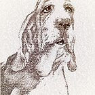 The old wise basset by Paula Belle Flores