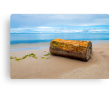 Too big for the sea Canvas Print