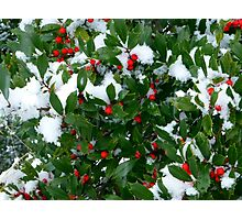 Jolly Holly Photographic Print