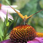 Butterfly eating by Jackie Popp