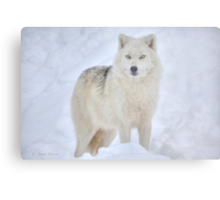 ...the season of the Wolf...     [FEATURED 6x) Metal Print