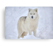 ...the season of the Wolf...     [FEATURED 6x) Canvas Print