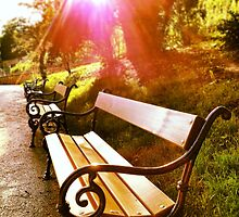The bench by miresk