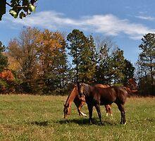 Neighbor Horses by Eileen Brymer
