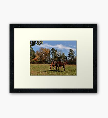 Neighbor Horses Framed Print
