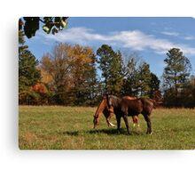 Neighbor Horses Canvas Print