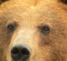 Ursus Arctos / Brown Bear Sticker