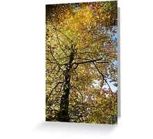 Yellow fall tree Greeting Card