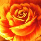 Rose Art by Artophobe