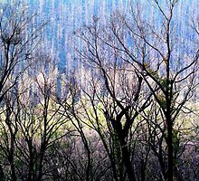 Spectral Trees. by Bette Devine