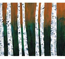 Natural Birch Trees Photographic Print