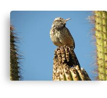 Cactus Wren on Lookout Canvas Print