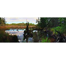 Swamp Water Fever Photographic Print