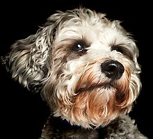 Baxter, Dog of Mcgarrybowen by ahmerkalam