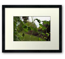 Threads of Nature Framed Print
