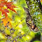 Eye on Autumn by Kenneth Haley