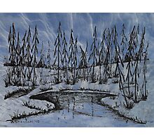 Snow Bound Forests Photographic Print