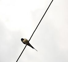 Bird on Wire by mikeoug