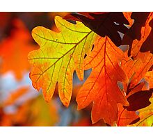 Autumn Oak Photographic Print