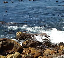 Coastal Waters by RachelSheree