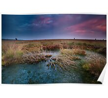 Purple sunset over swamp Poster