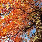Autumn hues by Alberto  DeJesus