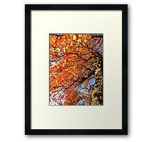 Autumn hues Framed Print