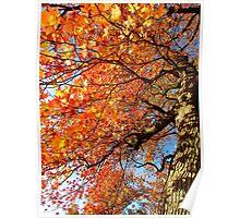 Autumn hues Poster