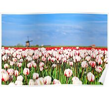 Tulips and windmill Poster