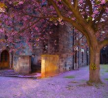 Blossom at the Abbey by Karen Brodie