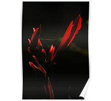 Canna Lily Dressed In Web Poster