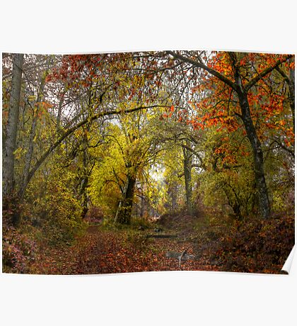Talk About Fall Colors ~ Takena Trail ~ Poster