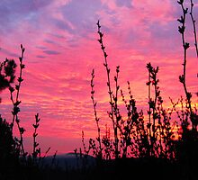 SunRise on Celista  by HomeTimeArt