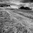 Up Windy Hill BW by Andy Freer