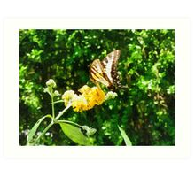 Yellow Swallowtail on Yellow Lantana Art Print