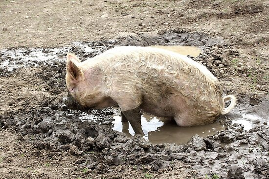 Happy as a pig in mud by missmoneypenny