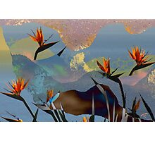 Nouveau Birds Of Paradise Photographic Print