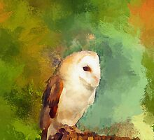 Barn Owl portrait by buttonpresser