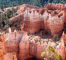 Bryce Canyon Utah Views 96 by Bo Insogna